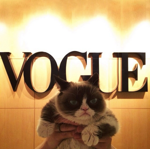 This Happened: Grumpy Cat Went to Vogue