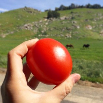 California's mild climate makes for fresh produce year round.
